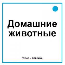 домашние животные на английском видео
